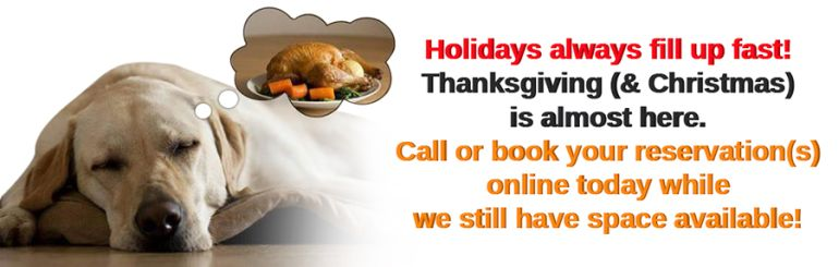 Holidays are fast approaching, book Thanksgiving and Christmas visits soon