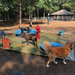 Dog parks in Wake County, NC