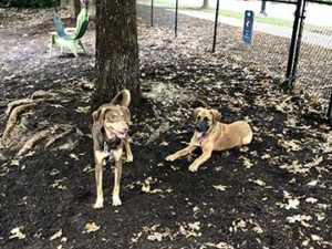 Two dogs at North Hills Dog Park in Raleigh, NC