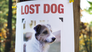 Lost Dog Poster from local pet sitters in raleigh