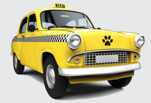 Pet Taxi service for Raleigh