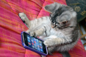 cute kitten playing on an iphone